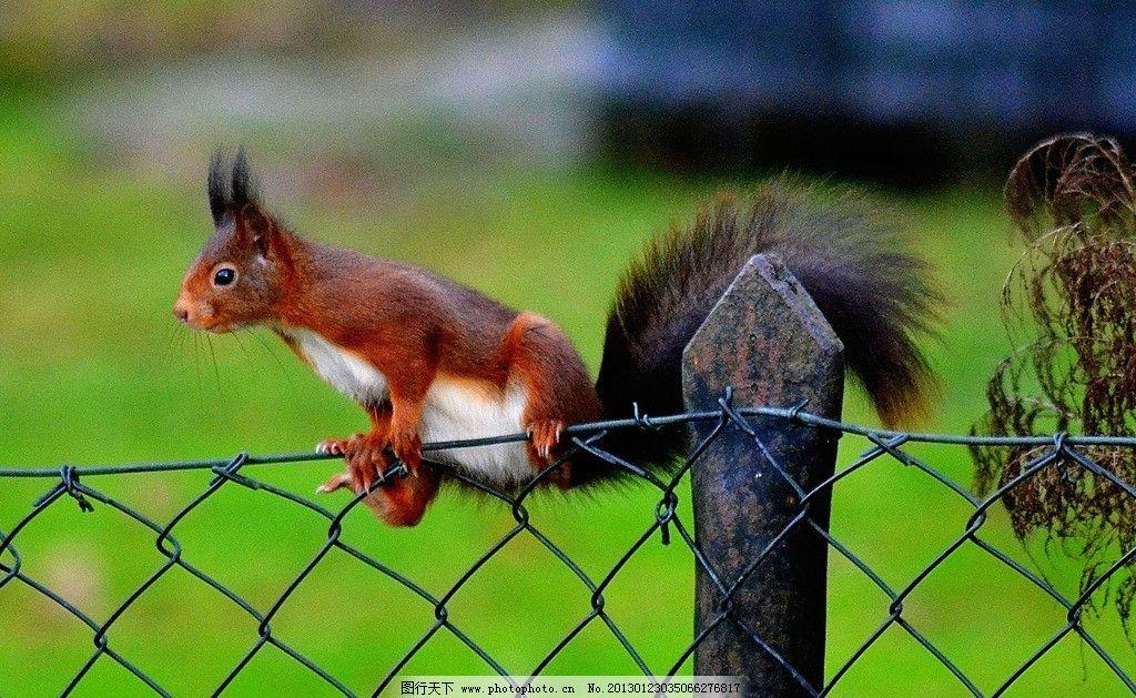 栅栏 松鼠 铁栅栏 铁丝 动物 绿色 可爱 野生动物 生物世界 摄影 300