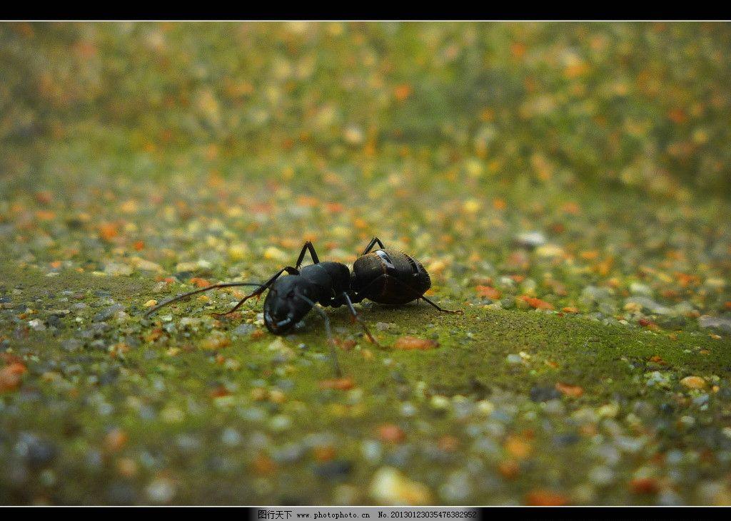 蚂蚁 微距 昆虫世界 昆虫 生物世界 摄影 180dpi jpg