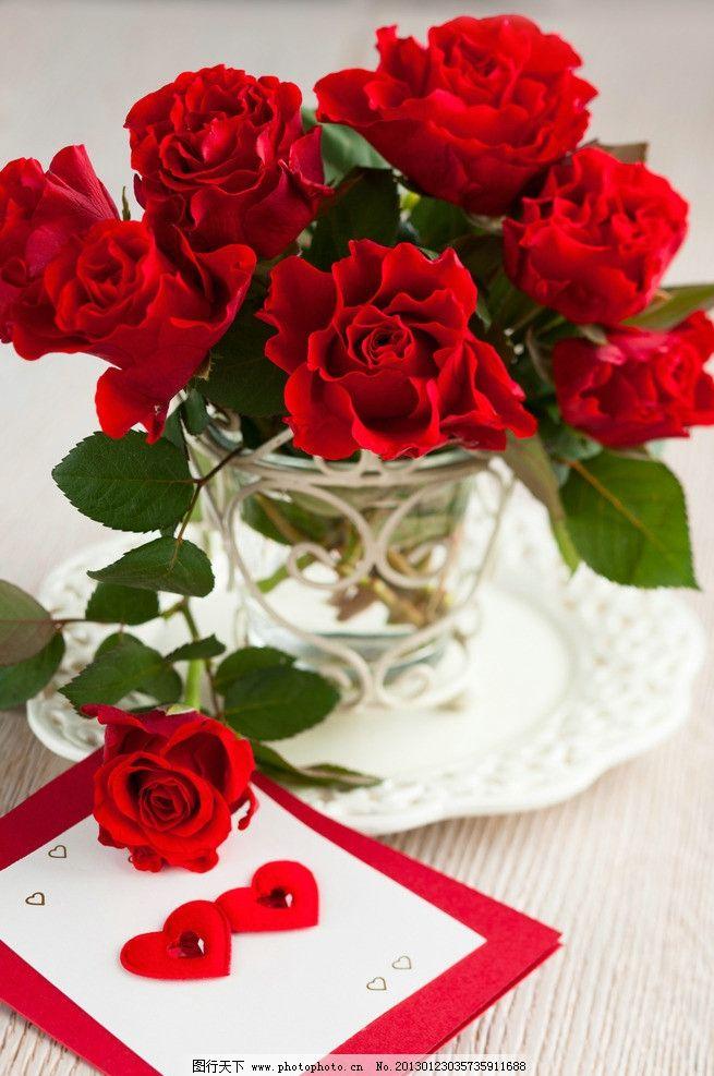 玫瑰花 鲜花 红玫瑰 红花 花朵 绿叶 爱情 情人节 植物 花草图片