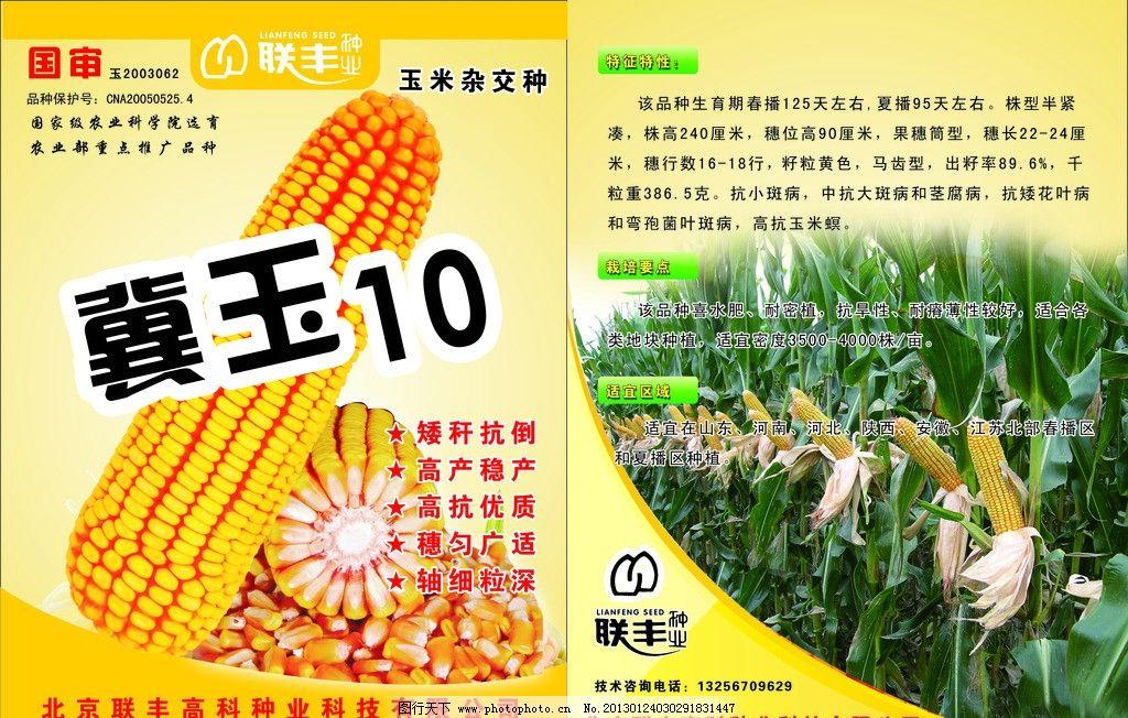 玉米根横切面手绘图