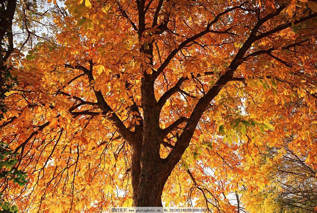 秋天 森林图片