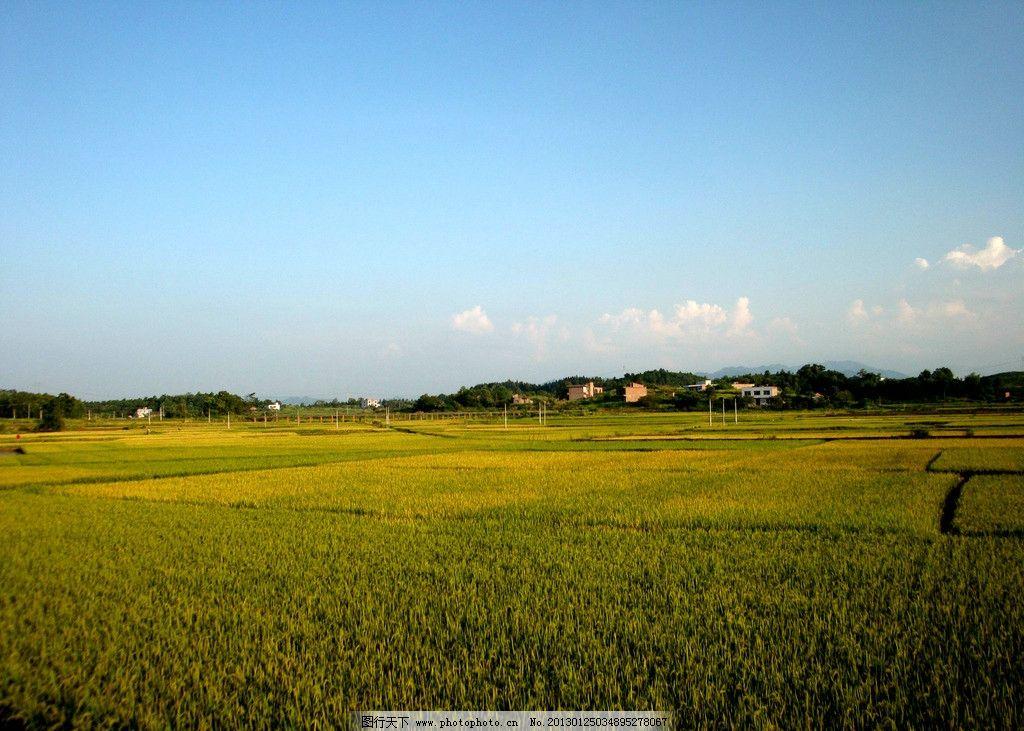 田园风光 田野 农村 村庄 庄稼 丰收 乡村旅游 蓝天白云 自然风光