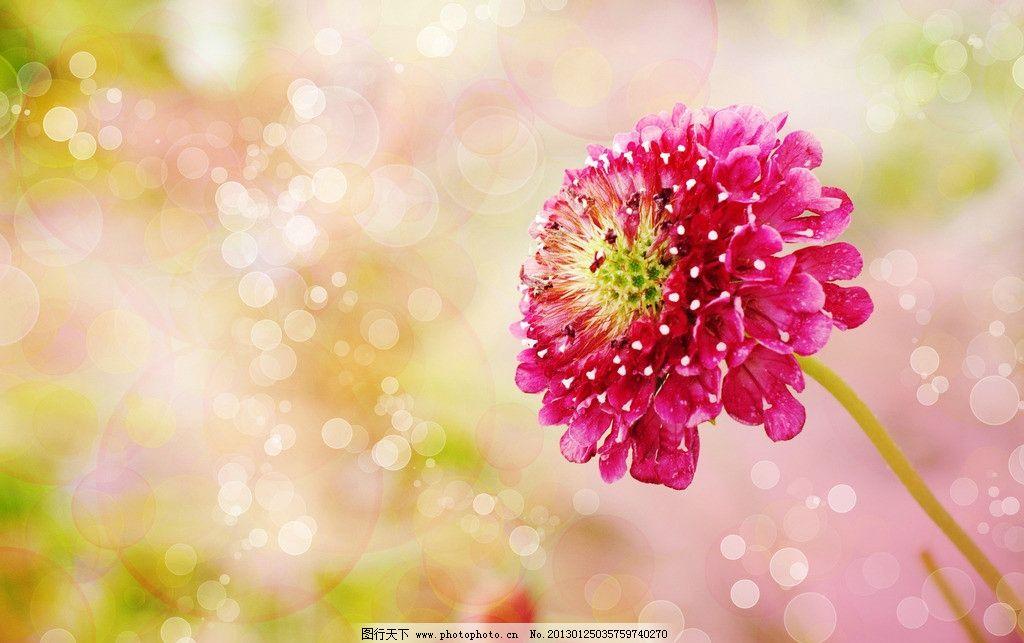 鲜花野花 风景 美景 唯美 梦幻 浪漫 温馨 美丽 漂亮 花朵