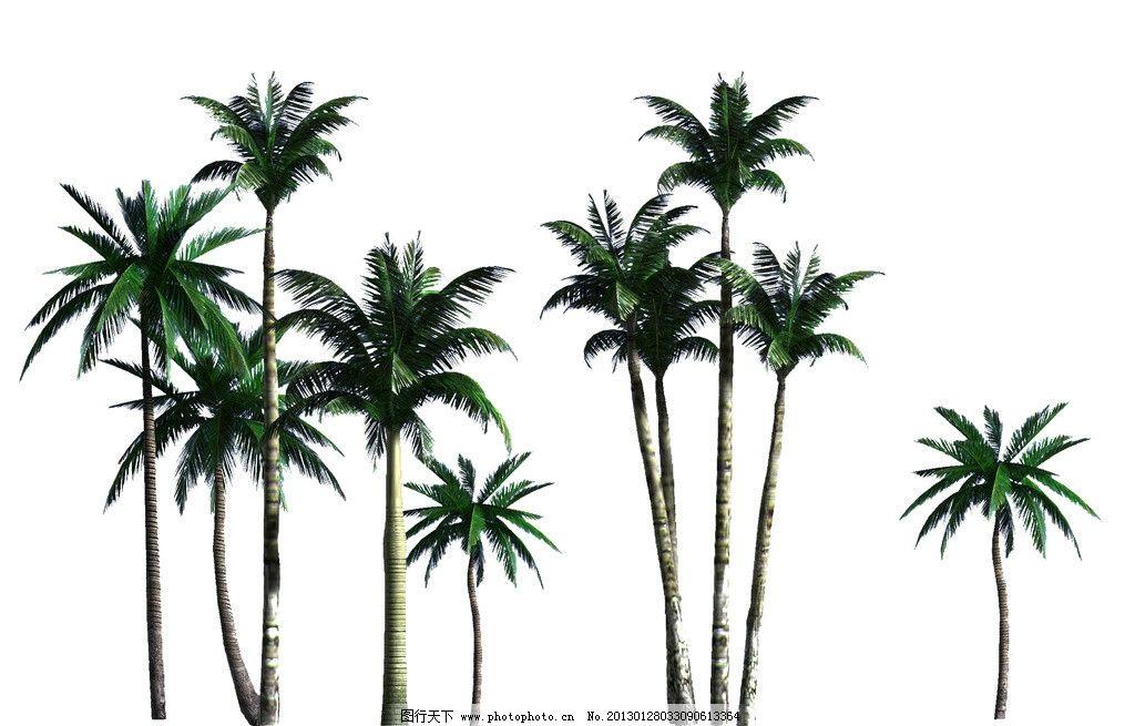 椰子树分层素材 棕榈科