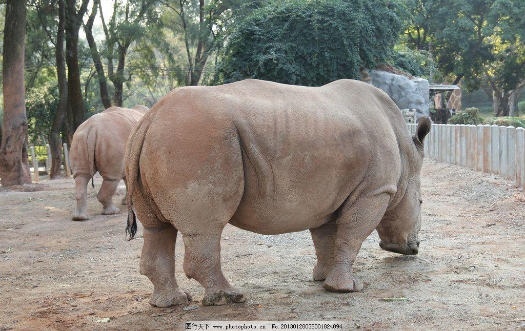 白犀牛 动物园 广州动物园 摄影