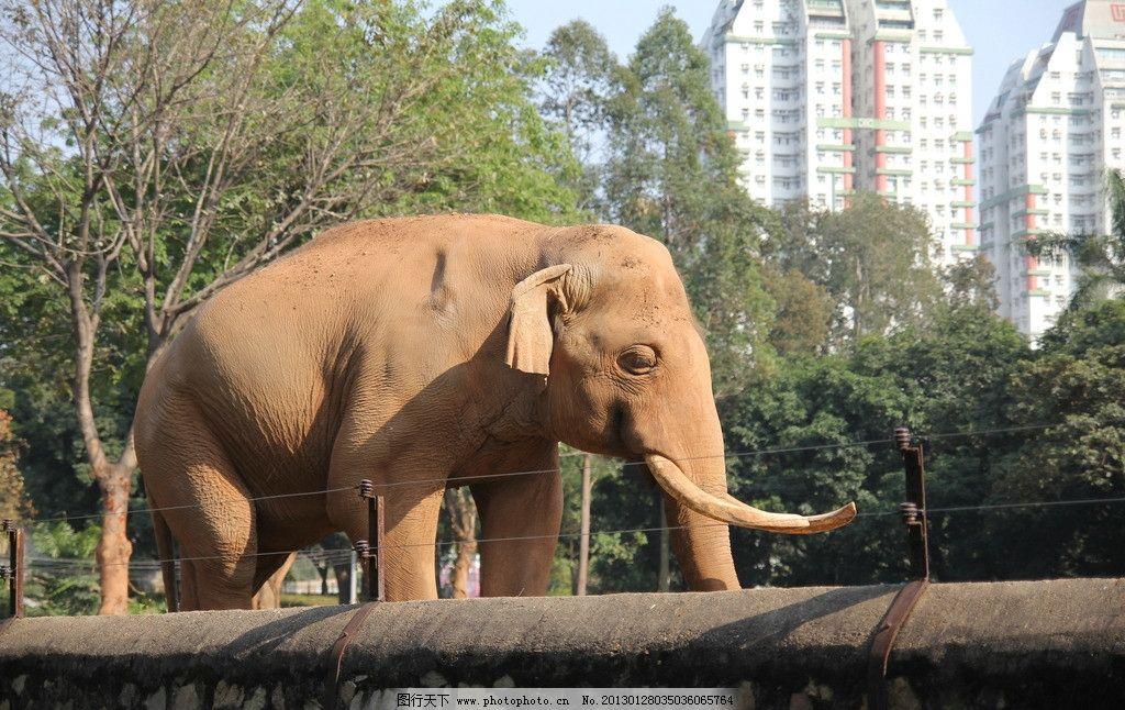 大象 大笨象 广州动物园