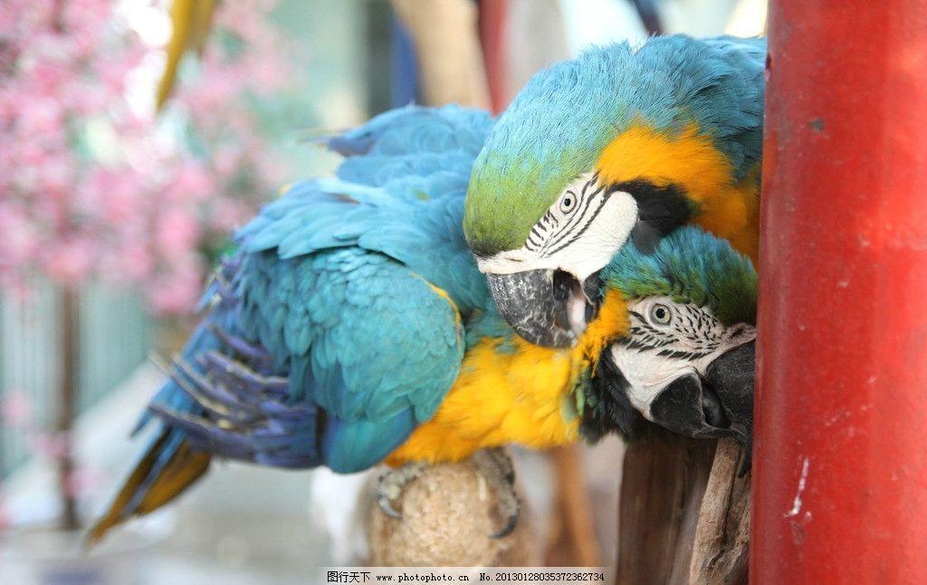 鹦鹉 动物园 广州动物园 鸟类 生物世界 摄影 72dpi jpg