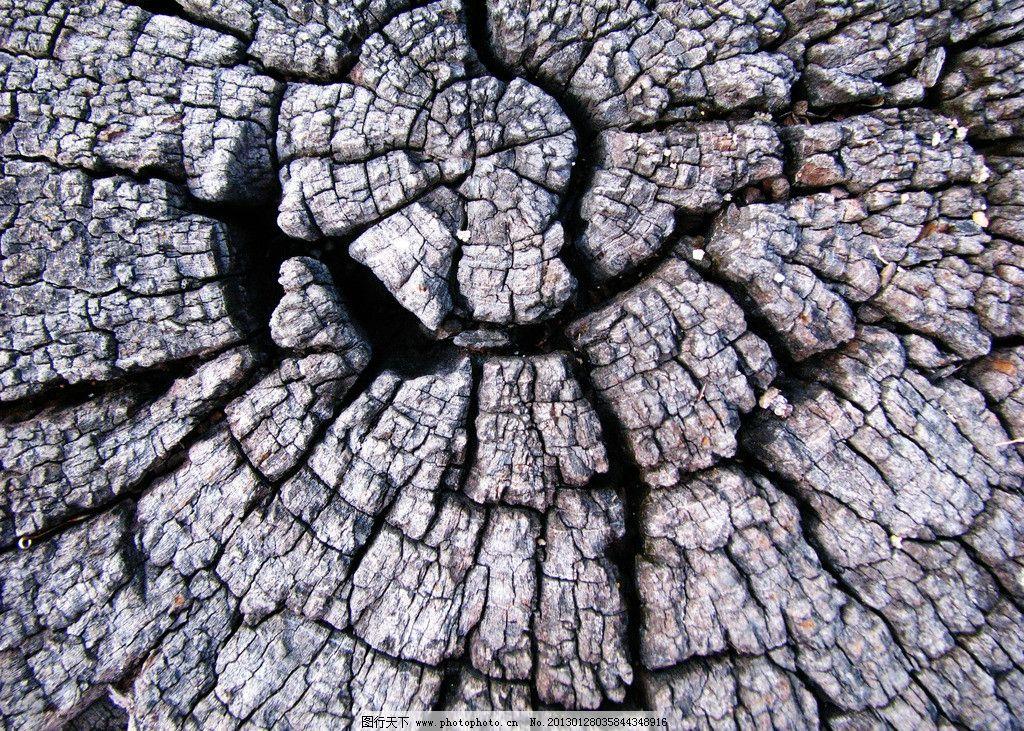 手绘树木纹路图片