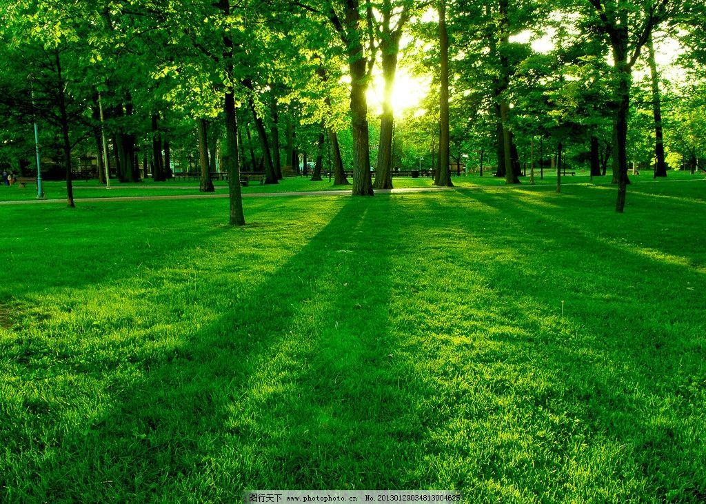 树林草地桌面背景图片