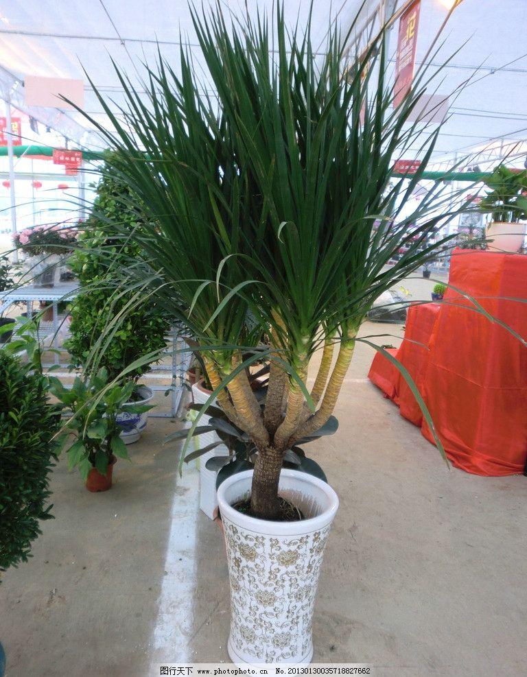 壁纸 盆景 盆栽 树 植物 768_987 竖版 竖屏 手机