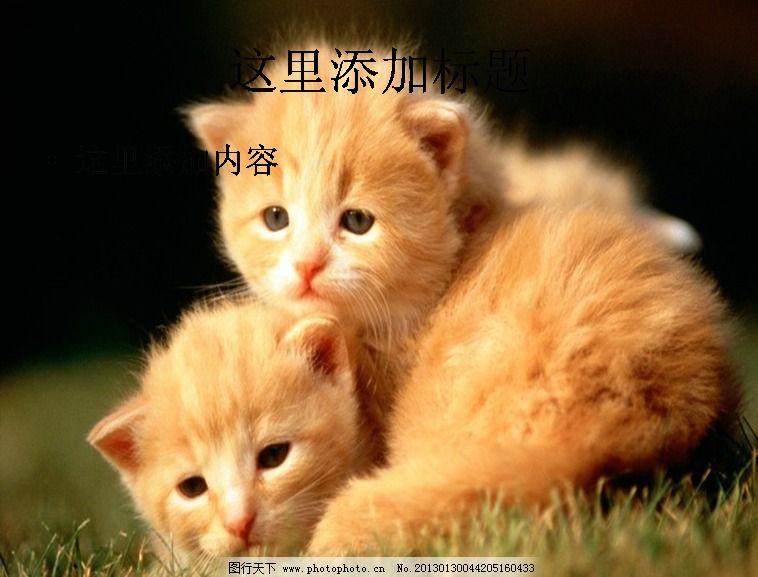 电脑ppt封面可爱小猫咪萌宠背景图片(12)