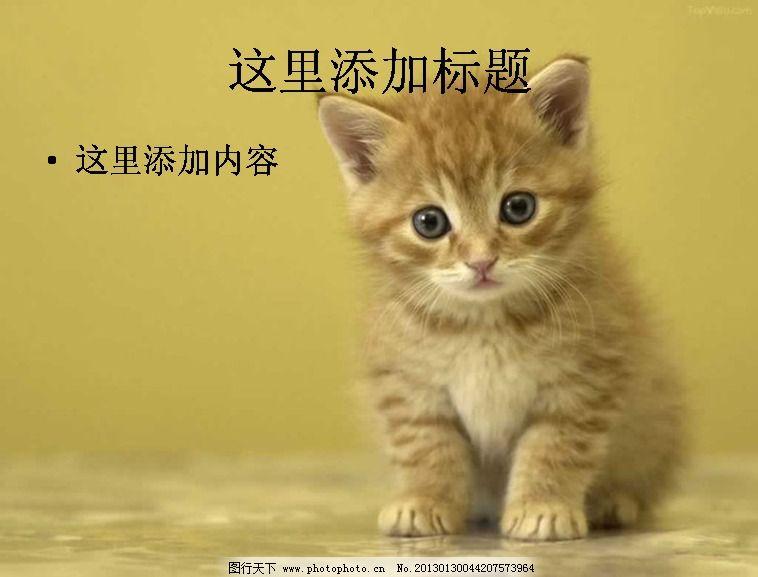 电脑ppt封面可爱小猫咪萌宠背景图片(2)