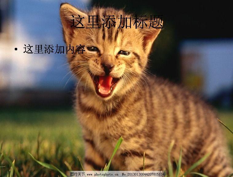 电脑ppt封面可爱小猫咪萌宠背景图片(4)