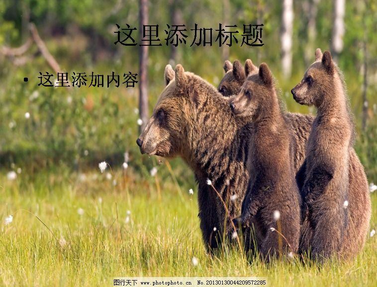 电脑宽屏ppt封面可爱的动物风景图片(7)