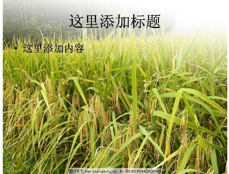 稻田素材 免費下載 風景 自然風景 ppt模板范文 ppt 自然風景ppt模板