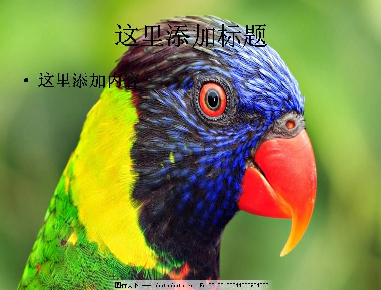 电脑ppt封面超可爱动物背景图片(6)