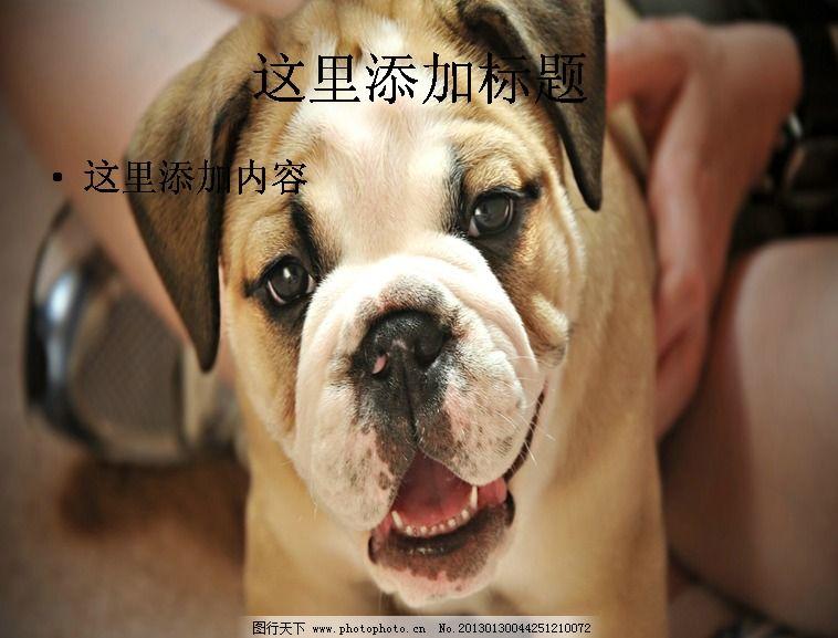 电脑ppt封面超可爱动物背景图片(5)