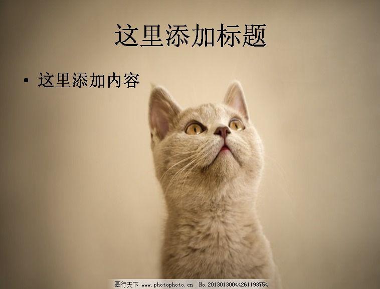 电脑ppt封面可爱小猫咪萌宠背景图片(9)