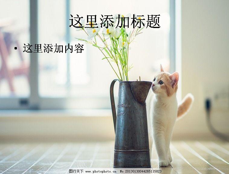 唯美可爱动物ppt(9)