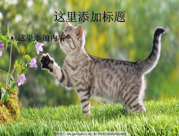 电脑ppt封面超可爱动物背景图片(4)