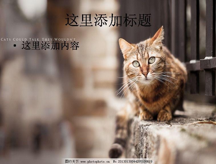 唯美可爱动物ppt(8)