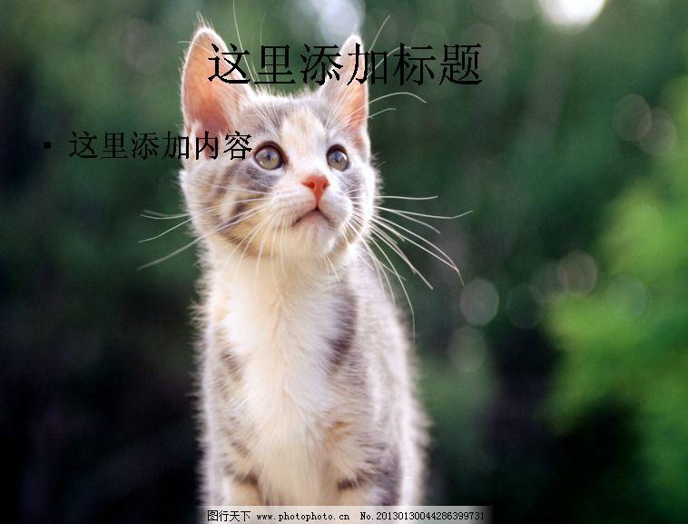 电脑ppt封面可爱猫咪背景图片(11)