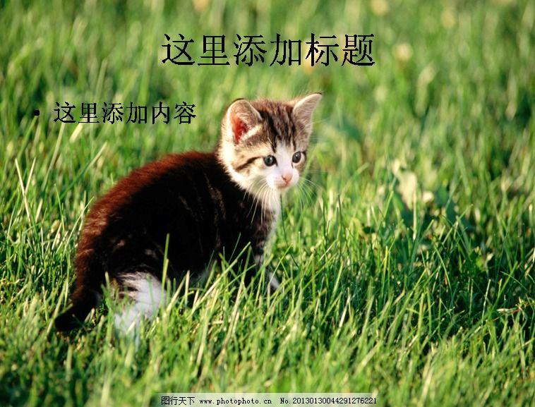 电脑ppt封面可爱猫咪背景图片(5)