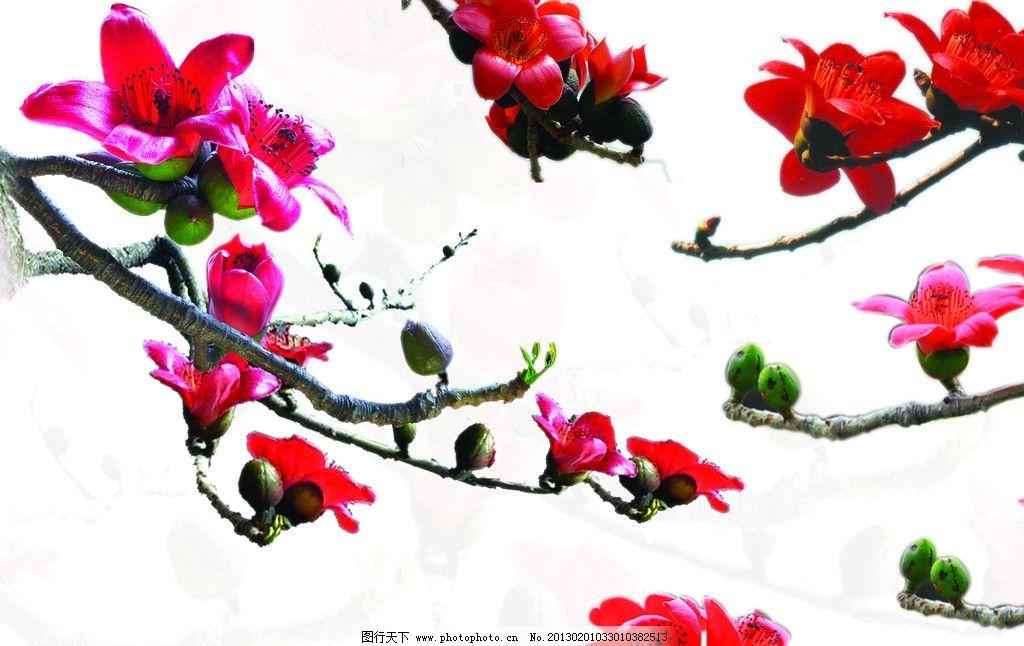 木棉花集图片