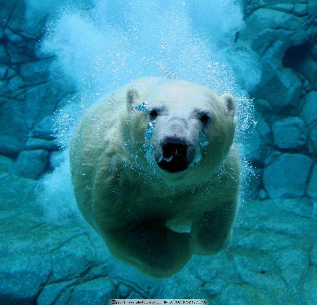 柏林德国动物园鲸鱼北极熊猝死110321北京您早视频_冬奥会吉祥物怎么画明星图片