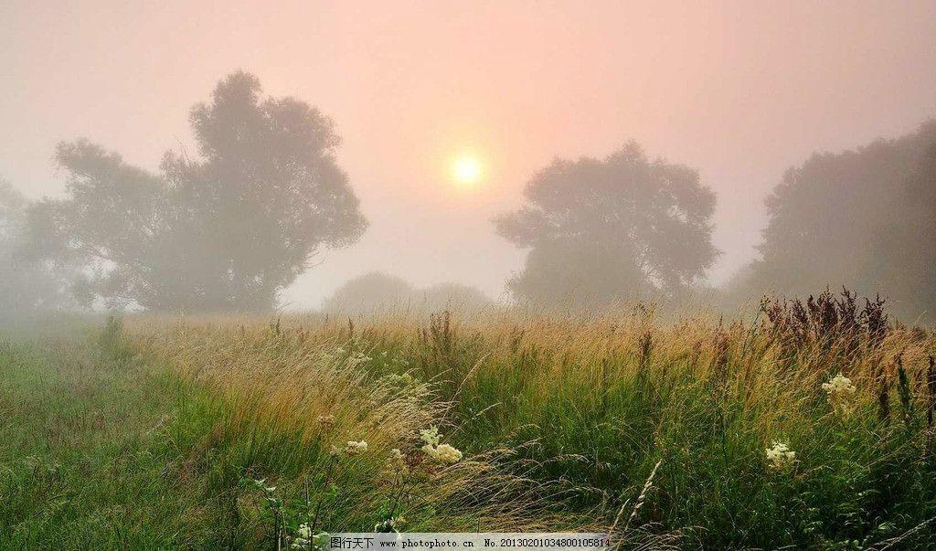 大雾弥漫 唯美雾境高清 阳光 落叶 森林 桌面壁纸 早晨 自然风景