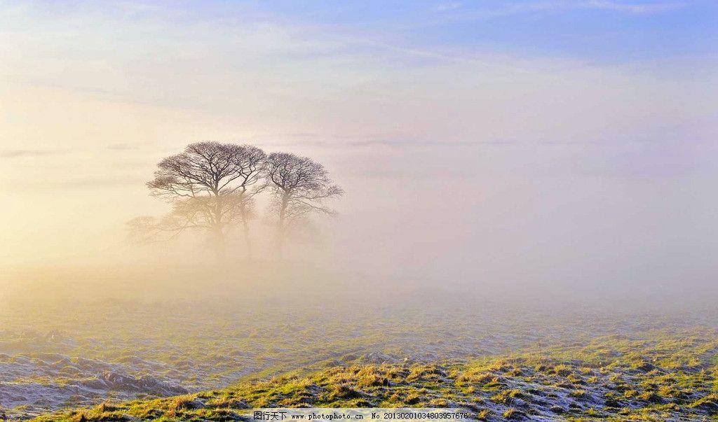 阳光 落叶 森林 桌面壁纸 早晨 自然风景 自然景观 摄影 晨雾 雾气