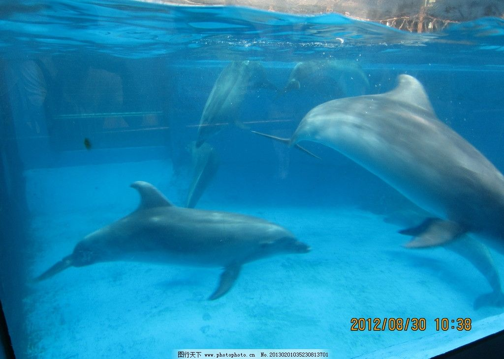 海豚 鱼类 生物世界 摄影 180dpi jpg