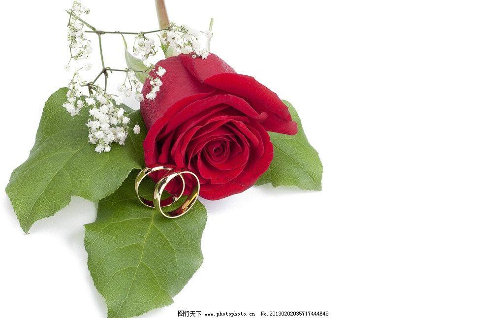 玫瑰花 玫瑰 花卉 花瓣 叶子 鲜花 礼物 爱心 爱情 戒指 结婚 花草