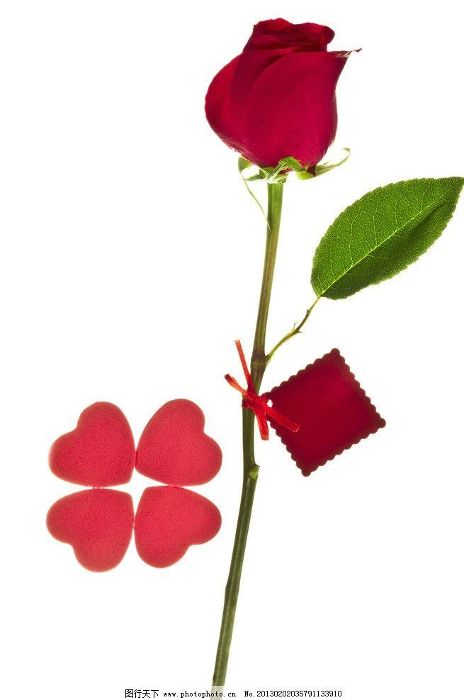 玫瑰花 玫瑰 花卉 花瓣 叶子 鲜花 礼物 爱心 爱情 彩带 卡片 花草