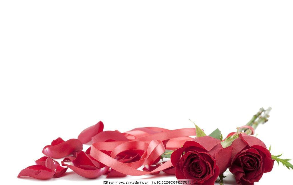 玫瑰花 玫瑰 花卉 花瓣 叶子 鲜花 礼物 爱心 爱情 花束 彩带 花草