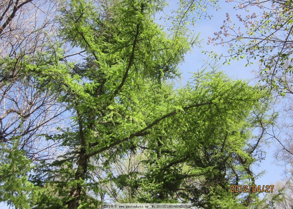 森林 蓝天 白云 大树 建筑 自然风景 自然景观 摄影 180dpi jpg