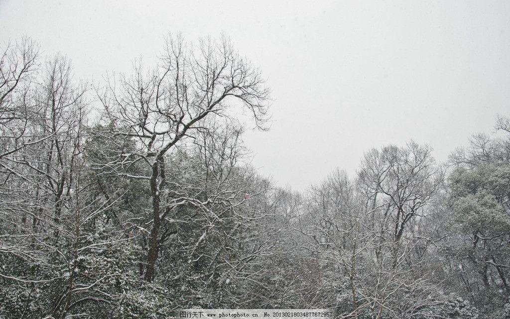 雪景 天空 树木 森林 雪天 积雪 雪花 下雪 风景 摄影