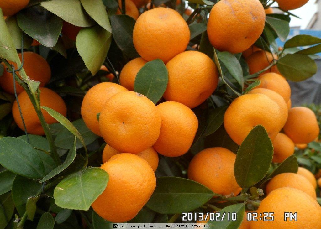 橘子 黄色 叶子 绿色 水果 生物世界 摄影 96dpi jpg