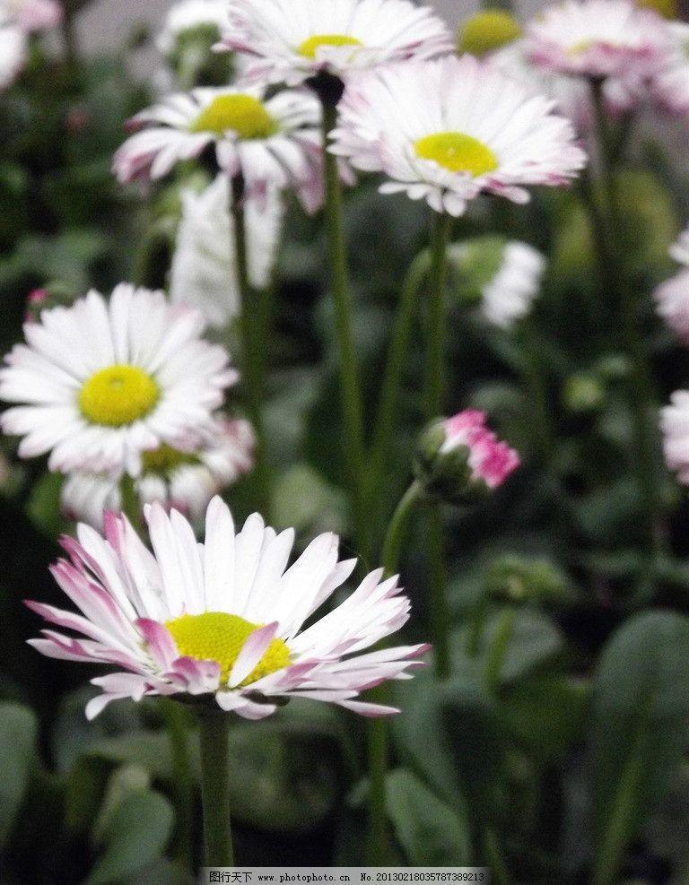 花园小花图片