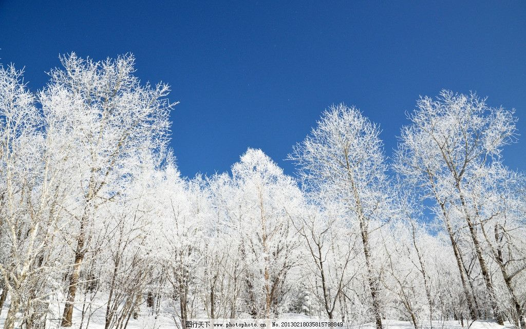 林中雪景 蓝天白云 雪地 唯美冬景 洁白 大自然魅力 树木树叶 生物