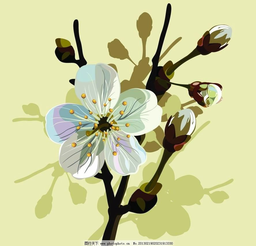 樱桃树枝花朵图片