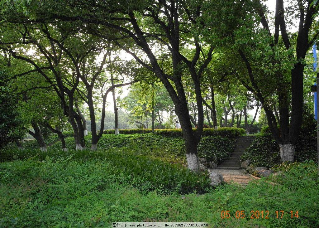 树林 绿色 林间小路 路板路 草地 野草 树木树叶 生物世界 摄影 300