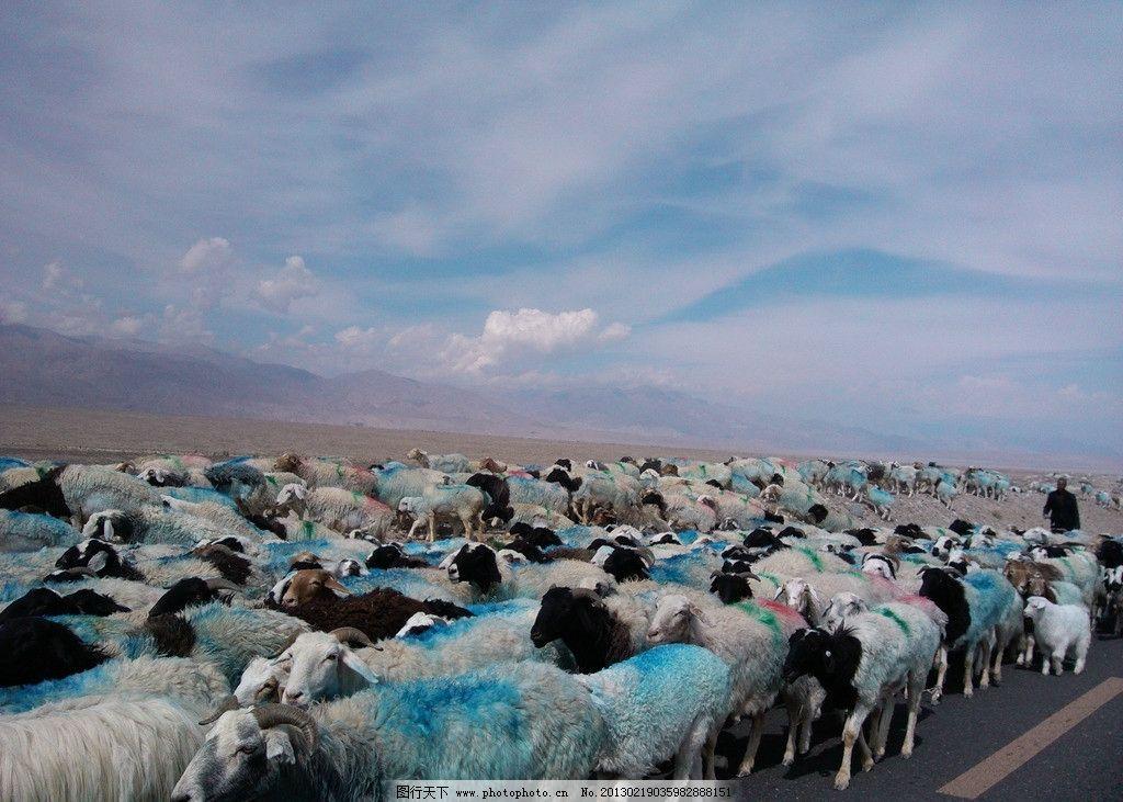 一群可爱的小山羊 一群