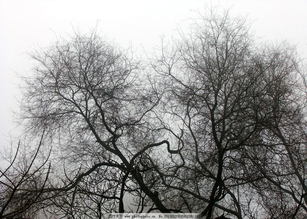 冬天树木摄影图片