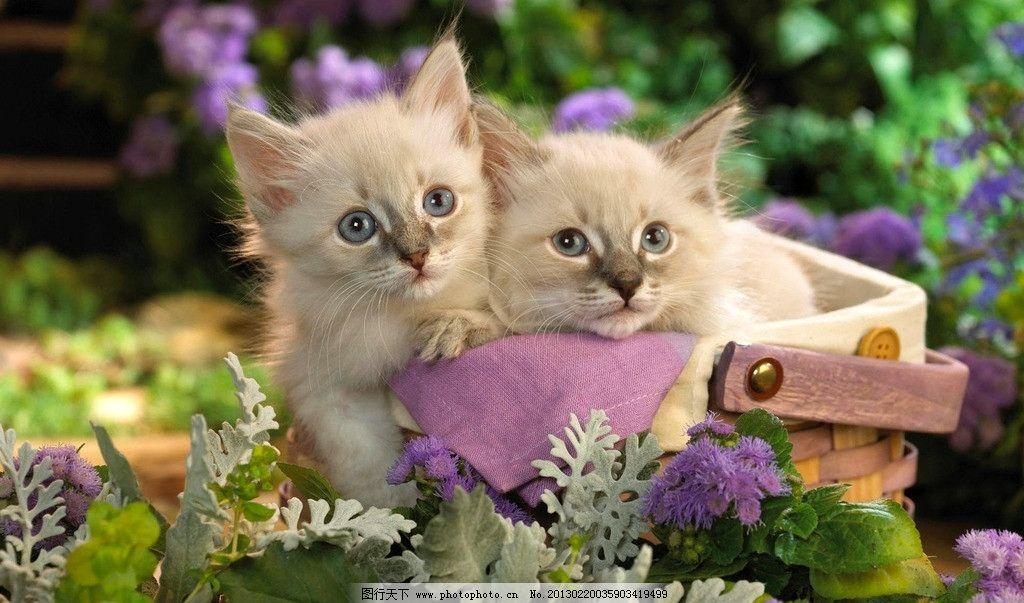 猫咪大小对比图片动物
