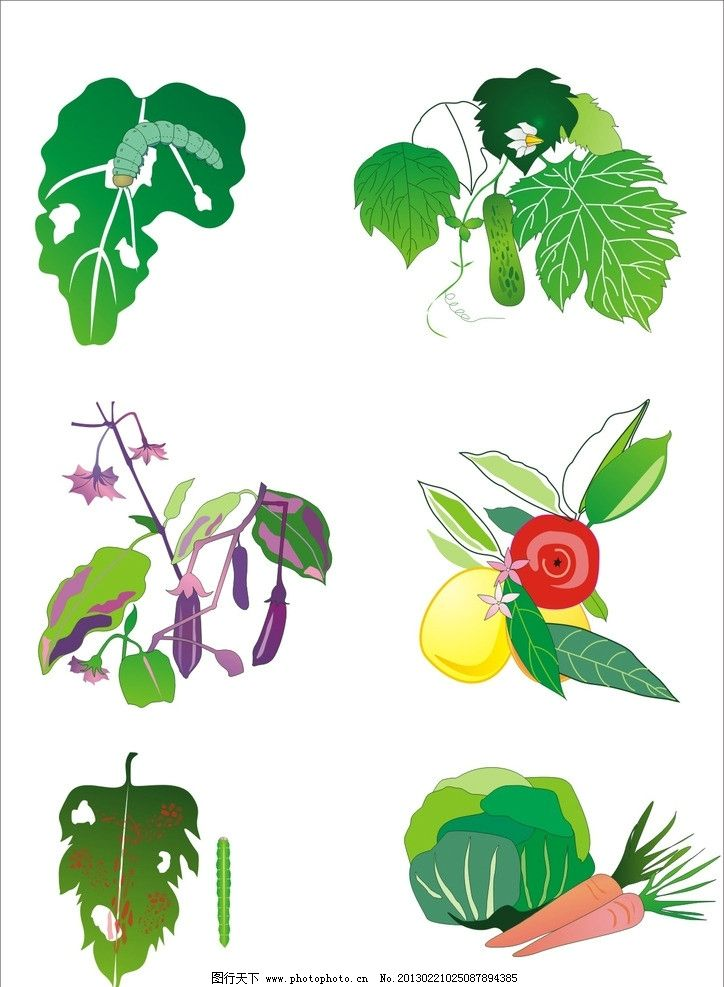 水果蔬菜 水果 蔬菜 绿叶 生物世界 矢量 cdr