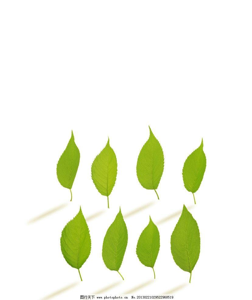 绿叶 叶子 树叶 椭圆形叶子 叶脉 绿色 清新 植物 春天素材 广告设计