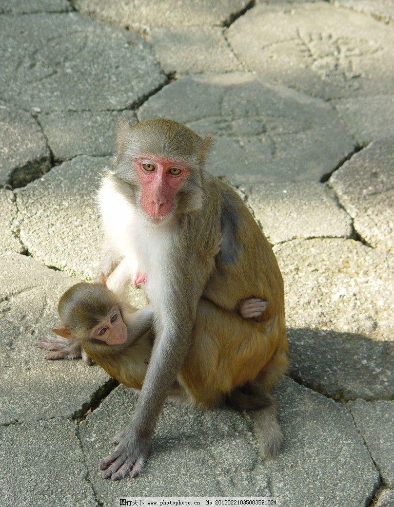 猴子 海南风光 小猴子 母猴 母子 母猴抱小猴 调皮 调皮的猴子 南湾