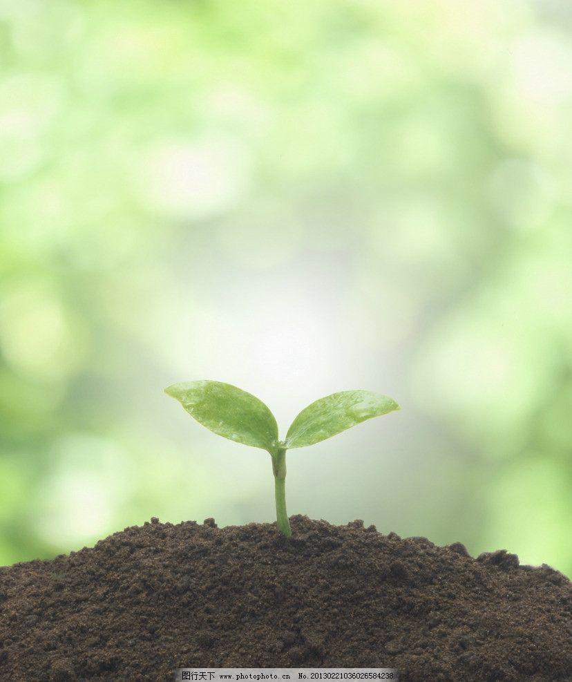 春天植物发芽风景图片