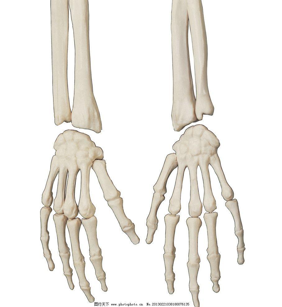 人体骨骼 骨骼 骨头 手骨 人骨骼 医疗护理 现代科技 摄影 304dpi jpg